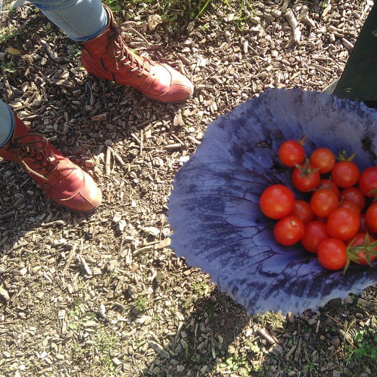 Kirschtomaten aus dem Garten